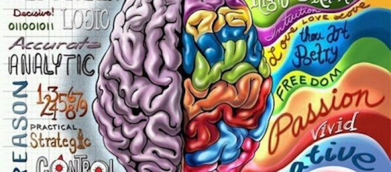The Whole Brain: Breaking Barriers Between Art and Science